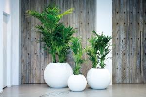 Kantoor Barendrecht planten groenvoorziening