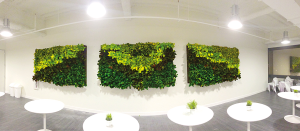 Projectinrichting Rotterdam living wall